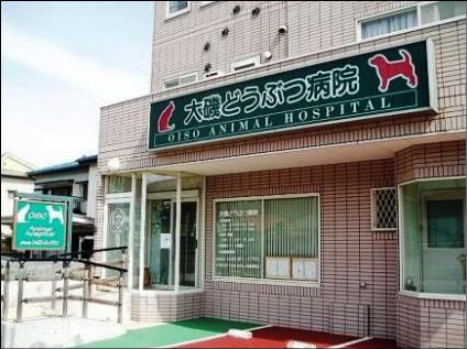 ☆ 大磯どうぶつ病院 ☆ OISO Veterinary Medicl Hospital